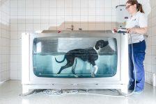 Tierklinik Ahlen Wassertherapie